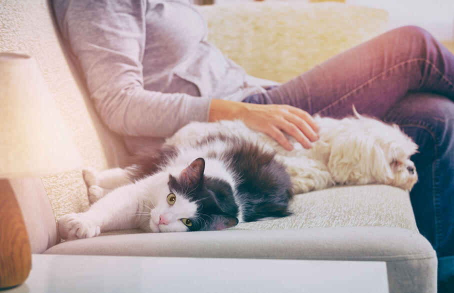 Good news for tenants with pets