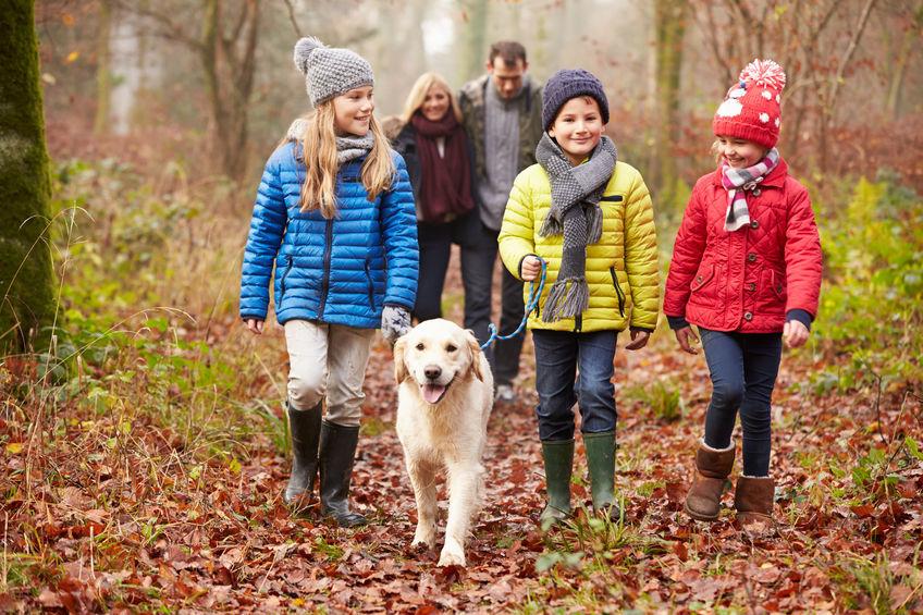 Autumn Walks round St Albans