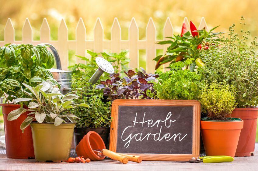 Plant yourself a Harpenden herb garden
