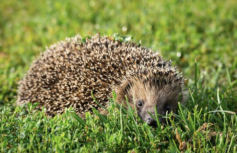 Harpenden wildlife survey