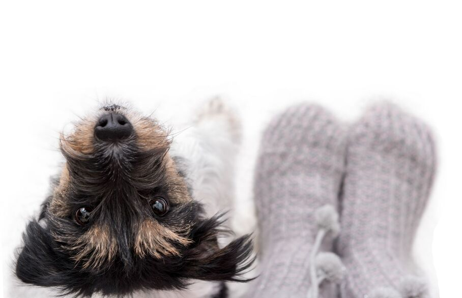 120% rise in demand for Lets with Pets