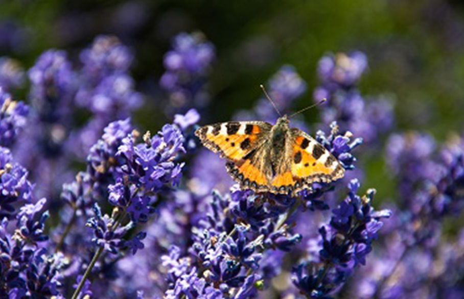 Birds, bugs and butterflies