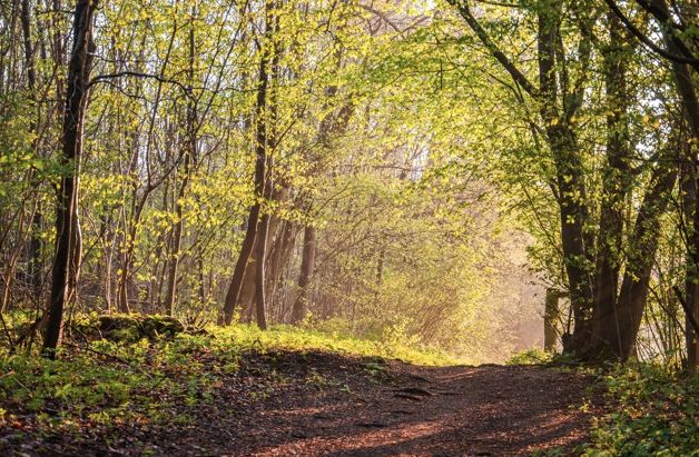Walk yourself fit in Surrey…