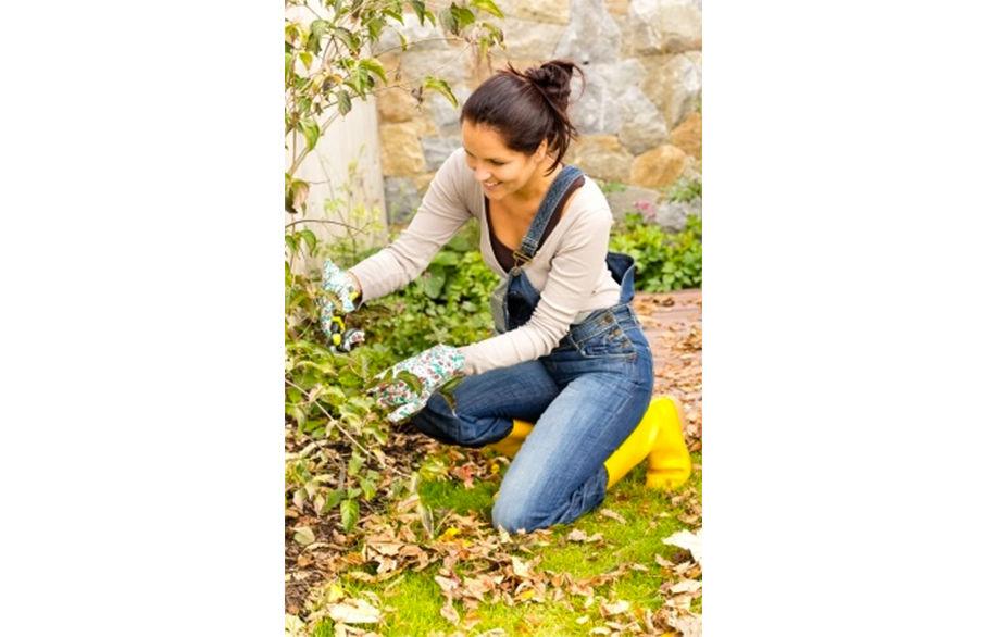 Your Autumn Garden - what to do in the garden...