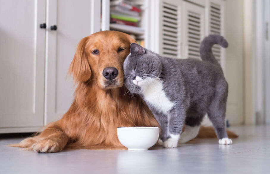 New government model tenancy agreement encourages more pet-friendly landlords