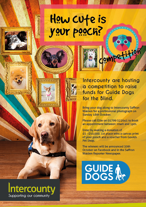 Come Along And Support The Guide Dogs At Intercounty Saffron Walden Office