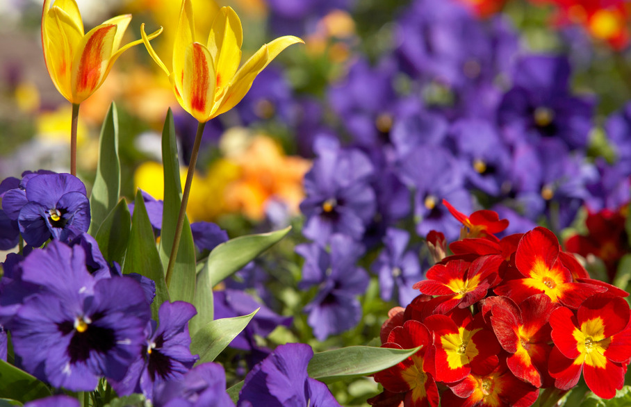 Intercounty Supports Stansted In Bloom