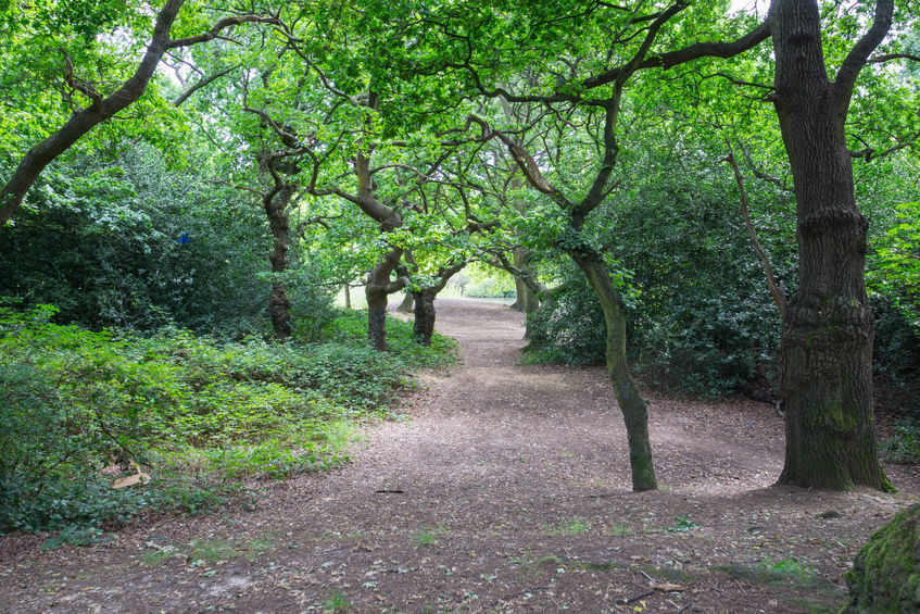 Saving the people's Forest for London