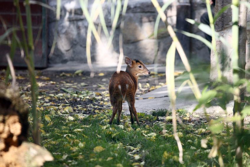 Deer walk in the park?