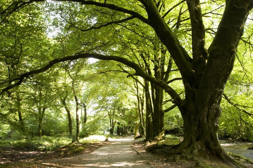 Epping Forest assets